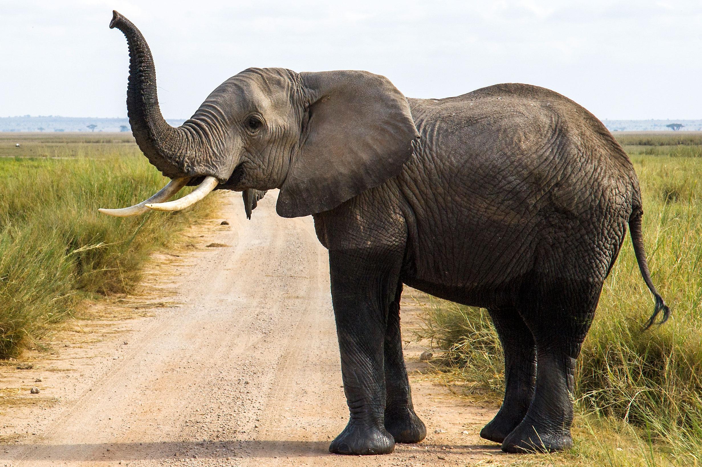 Bild mit rahmen afrikanischer elefant for Gartendeko bilder
